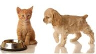 Friends - Pets at Cashman and O'Driscoll Vets, Glanmire, Cork