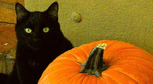 cat-pumpkin-stencils_black-cat-and-pumpkin